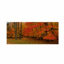 <strong>Trademark Fine Art</strong> 'Ohio Autumn' Canvas Art