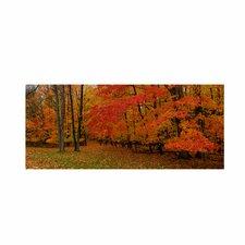 'Ohio Autumn' by Kurt Shaffer Photographic Print on Canvas