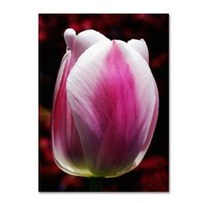 'Perfect Pink and White Tulip' Canvas Art