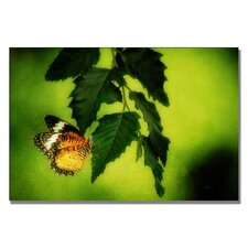<strong>Trademark Fine Art</strong> 'Lacewing Delight' Canvas Art