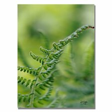 <strong>Trademark Fine Art</strong> 'Fern' Canvas Art