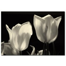 <strong>Trademark Fine Art</strong> 'Tulips' Canvas Art