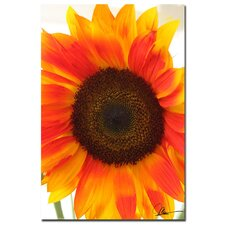 <strong>Trademark Fine Art</strong> 'Sunflower V' Canvas Art