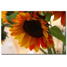 <strong>Trademark Fine Art</strong> 'Sunflowers VII' Canvas Art