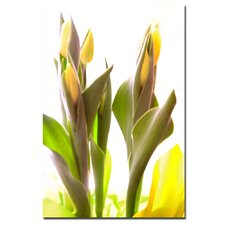<strong>Trademark Fine Art</strong> 'Tulips VIII' Canvas Art