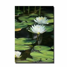 <strong>Trademark Fine Art</strong> 'Lovely Lilies' Canvas Art