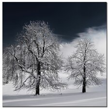 """White Nature"" by Philippe Sainte-Laudy Photographic Print on Wrapped Canvas"