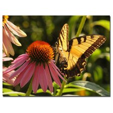 <strong>Trademark Fine Art</strong> 'Butterfly I' Canvas Art