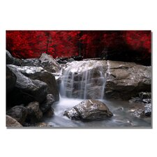 'Red Vison' by Philippe Sainte-Laudy Photographic Print on Canvas