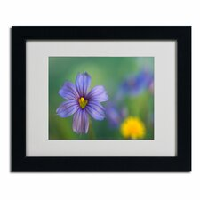 "<strong>Trademark Fine Art</strong> ""Blue Eyed Grass"" Framed Art"