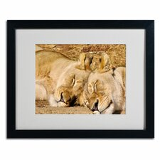 "<strong>Trademark Fine Art</strong> ""National Zoo - Lions"" Matted Framed Art"