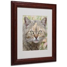"<strong>Trademark Fine Art</strong> ""Pretty Kitty"" Matted Framed Art"
