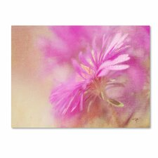 "<strong>Trademark Fine Art</strong> ""Dewy Pink Aster"" Canvas Art"