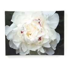 """Perfect Peony"" by Kurt Shaffer Photographic Print on Canvas"