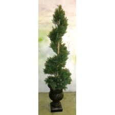 "60"" Tall Cypress Spiral Topiary in Planter"