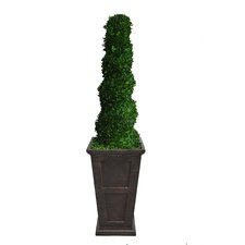 <strong>Laura Ashley Home</strong> Tall Preserved Spiral Boxwood Square Tapered Topiary in Planter