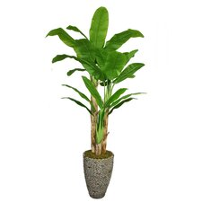 <strong>Laura Ashley Home</strong> Tall Banana Tree in Planter