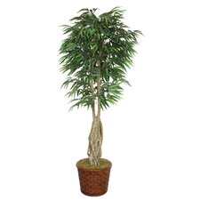 <strong>Laura Ashley Home</strong> Tall Willow Ficus Tree in Planter