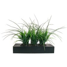 Grass in Contemporary Wood Planter