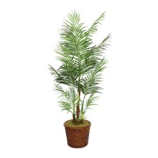 <strong>Laura Ashley Home</strong> Tall Areca Palm Tree in Planter