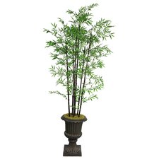 Tall Bamboo Tree in Urn