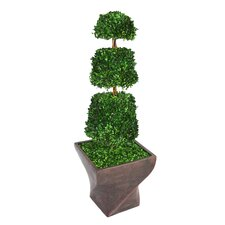 <strong>Laura Ashley Home</strong> Tall Preserved Spiral Boxwood Cone Topiary in Planter