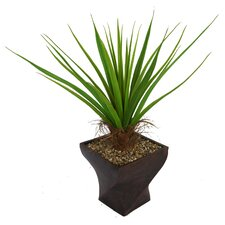 Tall Agave Plant with Cocoa Skin in Fiberstone Planter