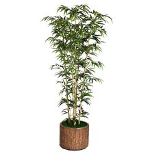 Tall Bamboo Tree in Planter