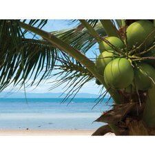 Outdoor Coconuts Photographic Print on Canvas