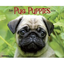 Pug Puppies 2014 Wall Calendar