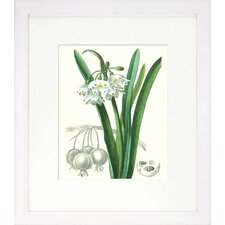 Floral Living Les Fleurs Blanches I Framed Graphic Art