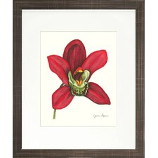 Floral Living Magestic Orchid III Framed Graphic Art