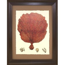 Seaside Living Coral II Framed Graphic Art in Red