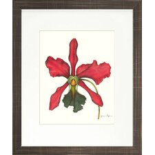 Floral Living Magestic Orchid IV Framed Graphic Art
