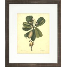 <strong>Indigo Avenue</strong> Floral Living Catesby Bird and Botanical III Framed Wall Art
