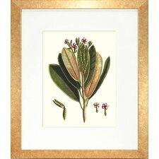 Floral Living Buchoz Leaves I Framed Graphic Art