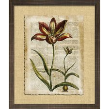 Floral Living Antiquarian Tulips I Framed Graphic Art