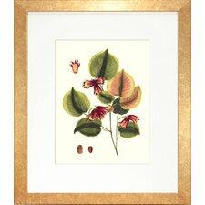 Floral Living Buchoz Leaves II Framed Graphic Art