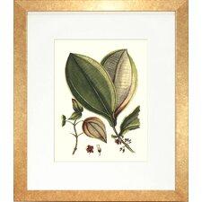 Floral Living Buchoz Leaves V Framed Graphic Art