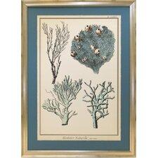 Seaside Living Coral Species II Framed Graphic Art