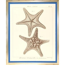 <strong>Indigo Avenue</strong> Seaside Living Striking Starfish II Framed Wall Art