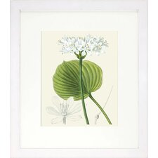 Floral Living Les Fleurs Blanches II Framed Graphic Art
