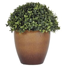 Artificial Half-Ball Boxwood Topiary in Gloss Planter