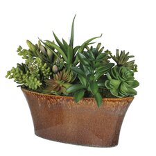 <strong>House of Silk Flowers Inc.</strong> Artificial Succulent Garden Desk Top Plant in Planter
