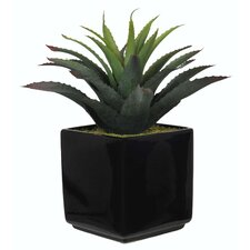 Artificial Red Tip Star Succulent Desk Top Plant in Pot