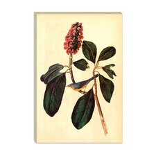 "<strong>iCanvasArt</strong> ""Warbler"" Canvas Wall Art by John James Audubon"