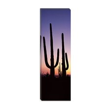 <strong>iCanvasArt</strong> Saguaro National Park, Tucson, Pima County, Arizona Canvas Wall Art