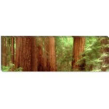 Redwood Trees, Muir Woods, California Canvas Wall Art