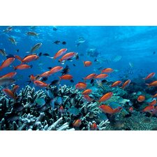Photography Ocean Fish Coral Reef Photographic Print on Canvas