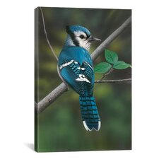 'Blue Jay' by Clarence Stewart Photographic Print on Canvas